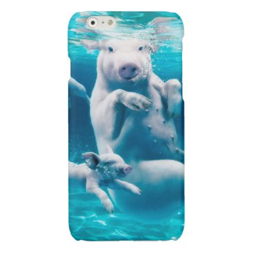 Beach Themed Pig beach - swimming pigs - funny pig glossy iPhone 6 case