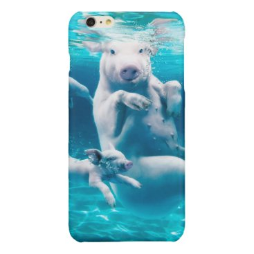 Beach Themed Pig beach - swimming pigs - funny pig glossy iPhone 6 plus case