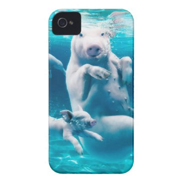 Beach Themed Pig beach - swimming pigs - funny pig iPhone 4 cover