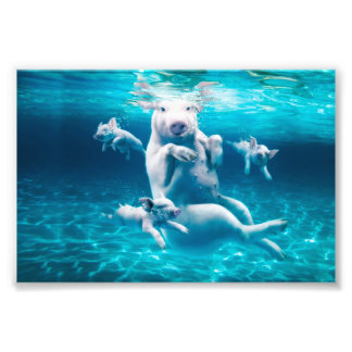 Pig beach - swimming pigs - funny pig photo print
