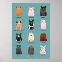 pig breeds poster