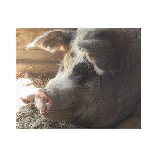 """Pig Canvas"" Canvas Print"