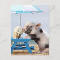 Pig eating ice cream on the beach postcard