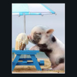 """Pig eating ice cream on the beach postcard<br><div class=""""desc"""">beach tropical sand sea , water ocean  pigs  piglet  , farm  animal  nature  agriculture,   mammal  pork  friendly  pink ,  cute  young  small  swine ,  rural  snout  baby  summer, , little pig , cool pig cute pig , baby pig mini pig , cute pig funny pig</div>"""