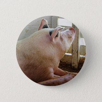 Pig Enjoying the Sun Pinback Button