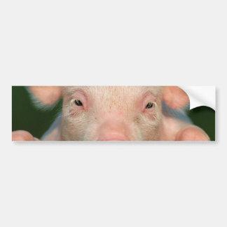 Pig farm - pig face bumper sticker