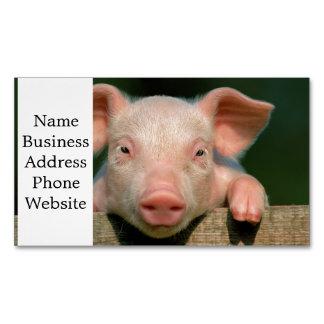 Pig farm - pig face business card magnet