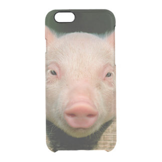 Pig farm - pig face clear iPhone 6/6S case