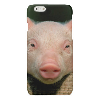 Pig farm - pig face glossy iPhone 6 case