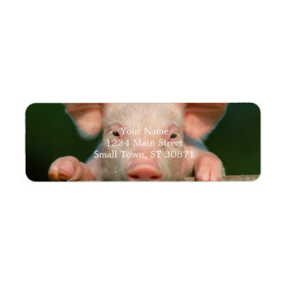 Pig farm - pig face label