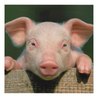 Pig farm - pig face panel wall art