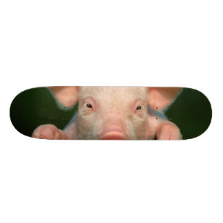 Pig farm - pig face skateboard