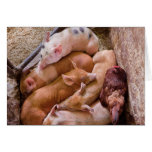 Pig - Five little piggies and a Chicken Greeting Card