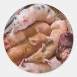 Pig - Five little piggies and a Chicken Round Stickers
