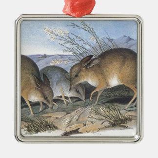 Pig Footed Bandicoot Metal Ornament