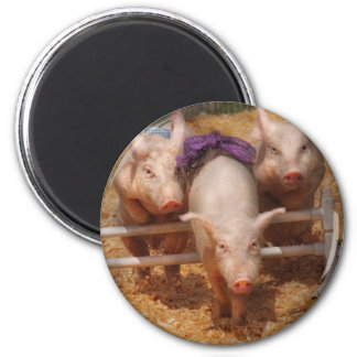 Pig - Getting past hurdles 2 Inch Round Magnet