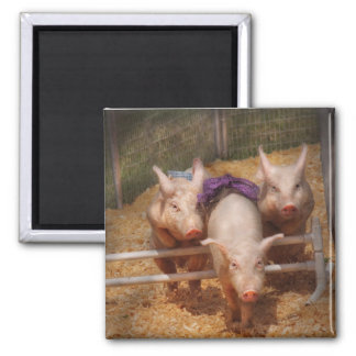 Pig - Getting past hurdles 2 Inch Square Magnet