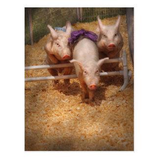 Pig - Getting past hurdles Postcard