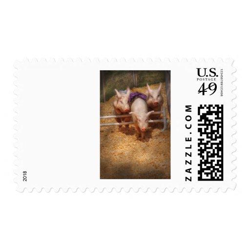 Pig - Getting past hurdles Stamp