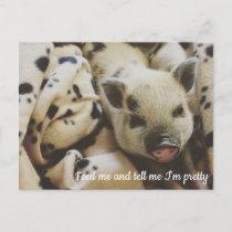 Pig in a Blanket Postcard