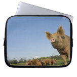 Pig in a Field Computer Sleeve