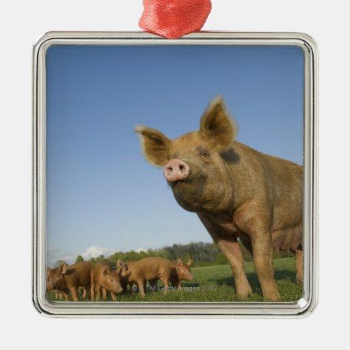 Pig in a Field Metal Ornament