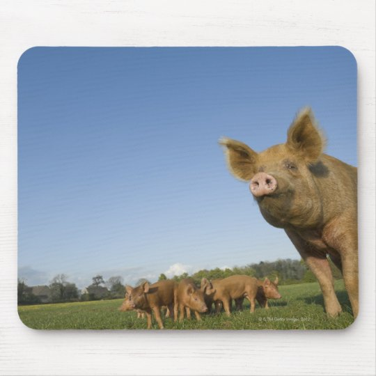 Pig in a Field Mouse Pad