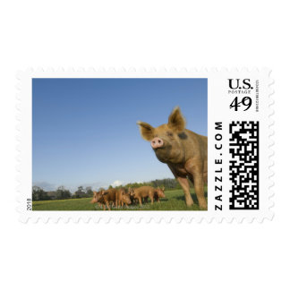 Pig in a Field Stamps