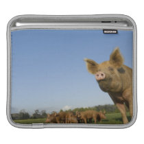 Pig in a Field Sleeve For iPads
