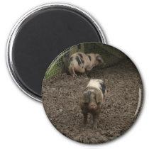 Pig in mud magnet
