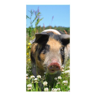 Pig in the Nature Card