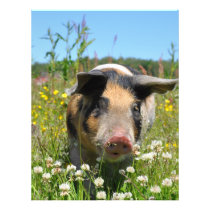 Pig in the Nature Flyer