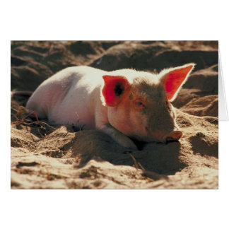 Pig in the Sun Card