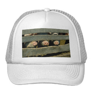 Pig Noses Trucker Hat