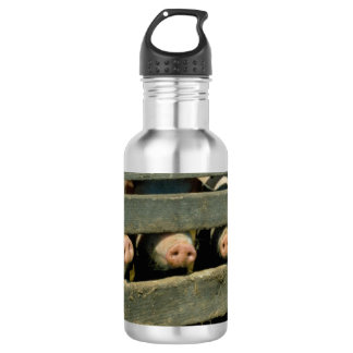 Pig Noses Water Bottle