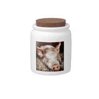 Pig of leisure candy jars