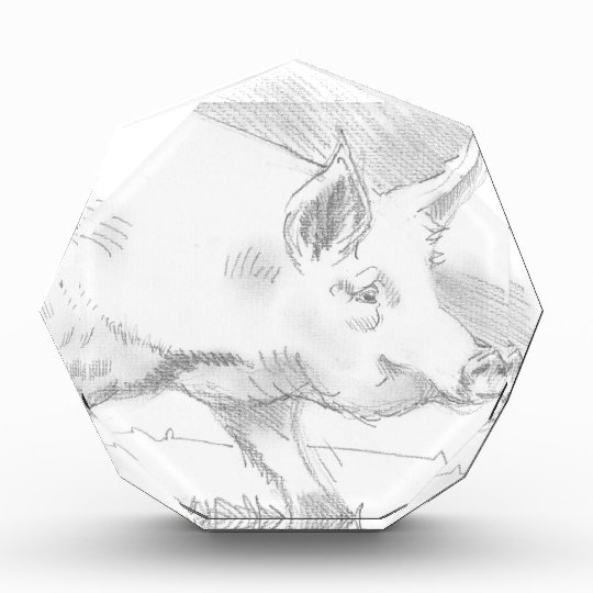 Pig Pencil Drawing Acrylic Award