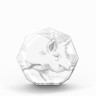Pig Pencil Drawing Award