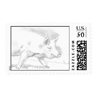 pig pencil drawing postage stamps