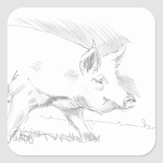 Pig Pencil Drawing Square Sticker
