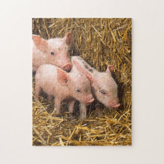 Pig Piglet Hay Jigsaw Puzzle