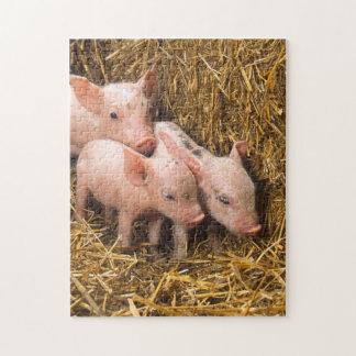 Pig Piglet Hay Jigsaw Puzzle