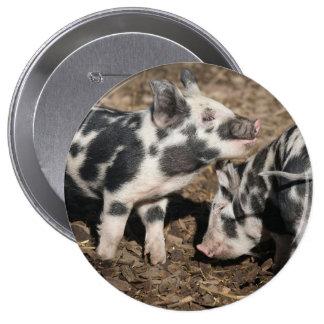 Pig Pinback Button