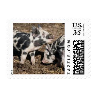 Pig Postage