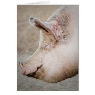 Pig Profile Greeting Card