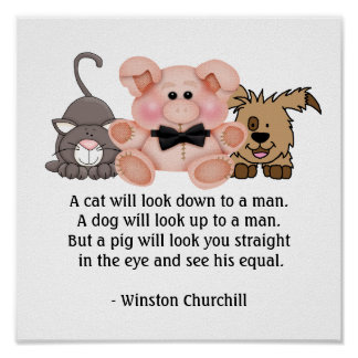 PIG Quote by Winston Churchill Poster