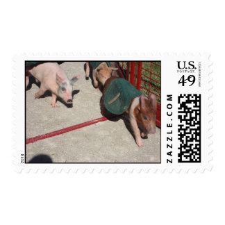 Pig Race Stamp