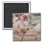 Pig racing, Pig race photograph, pink pig Fridge Magnet