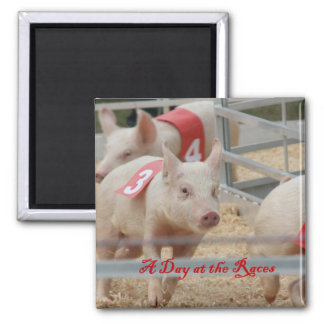 Pig racing, Pig race photograph, pink pig Magnet