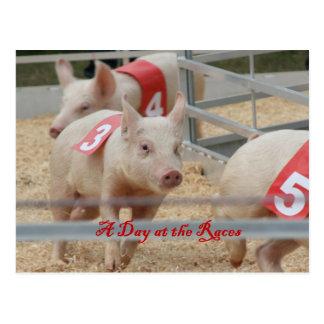 Pig racing, Pig race photograph, pink pig Postcard